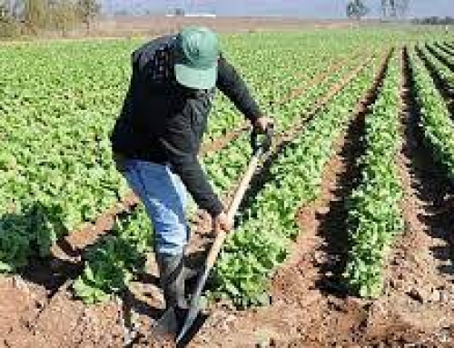 Bases Reguladoras de subvenciones para autónomos y/o empresas sector agroalimentario y  comercio de productos alimenticios (2 líneas de subvenciones)